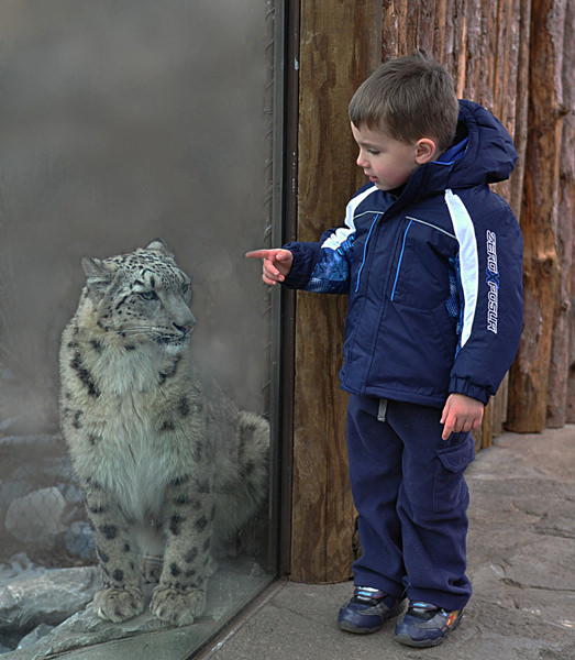 Snow Leopard and boy